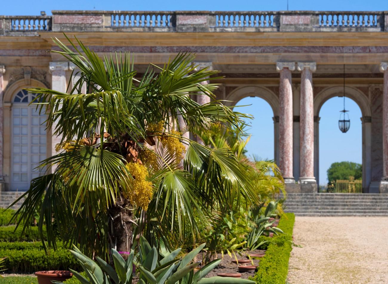 Château de Versailles Grand Trianon - Jardin de l'Afrique 2020