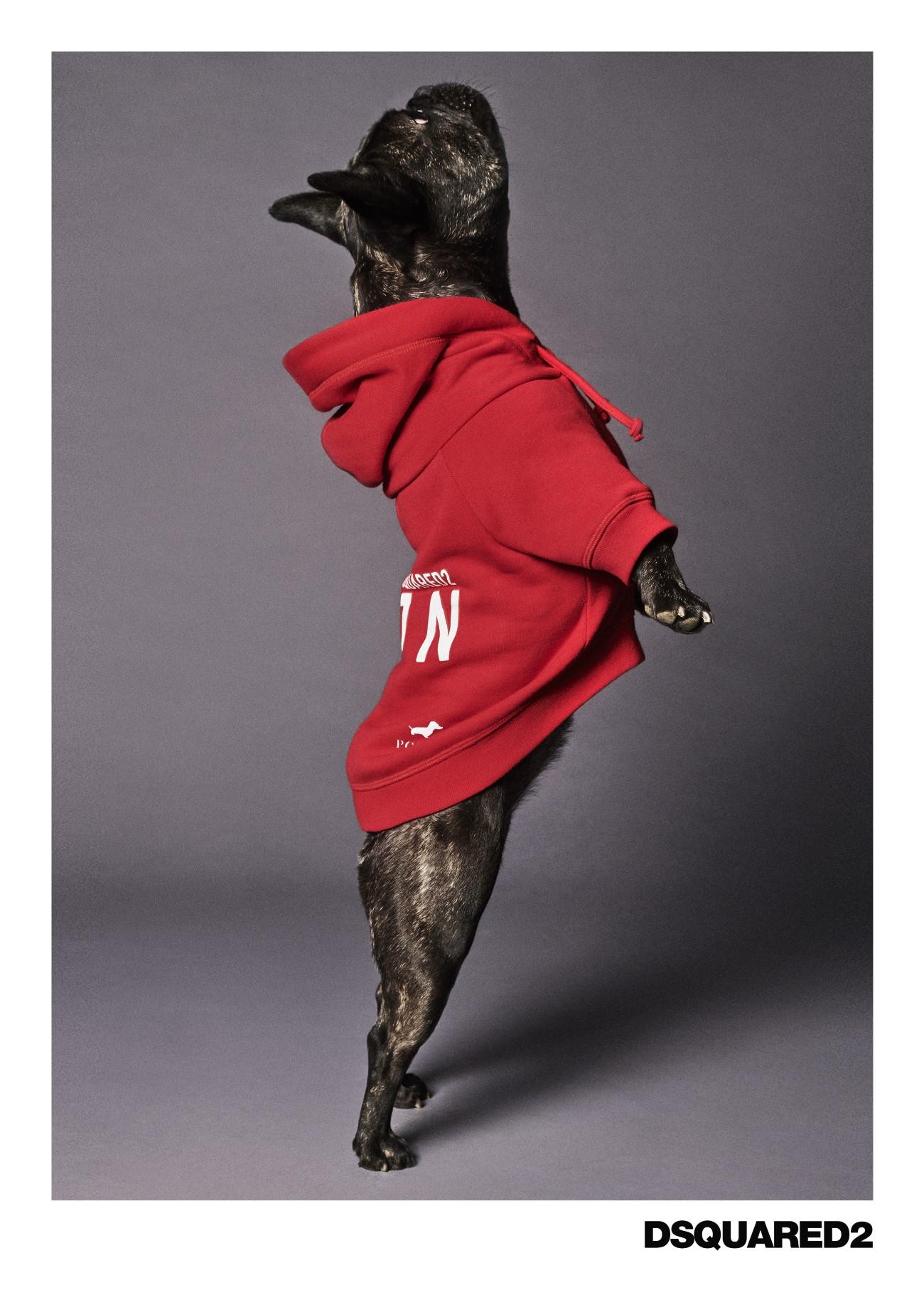 Poldo Dog Couture x Dsquared2