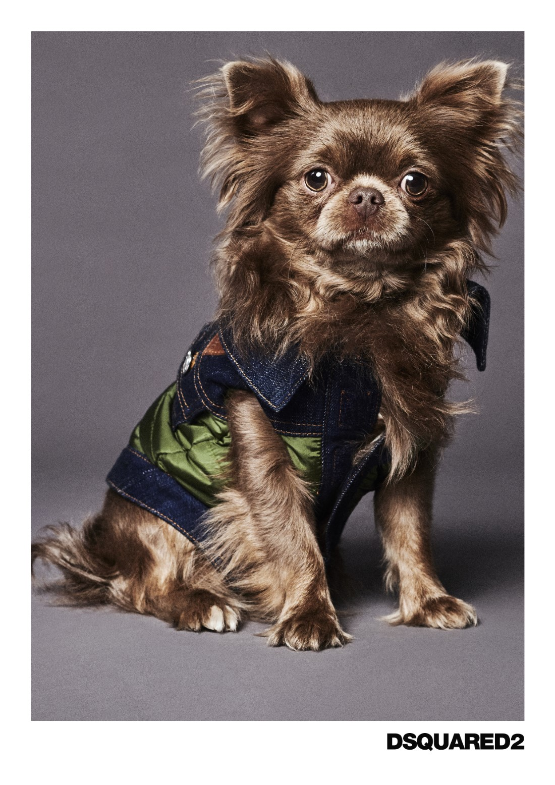 Poldo Dog Couture x Dsquared2
