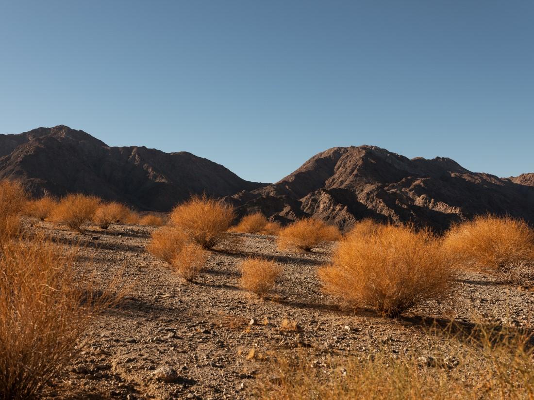 Richard Mille x Desert X