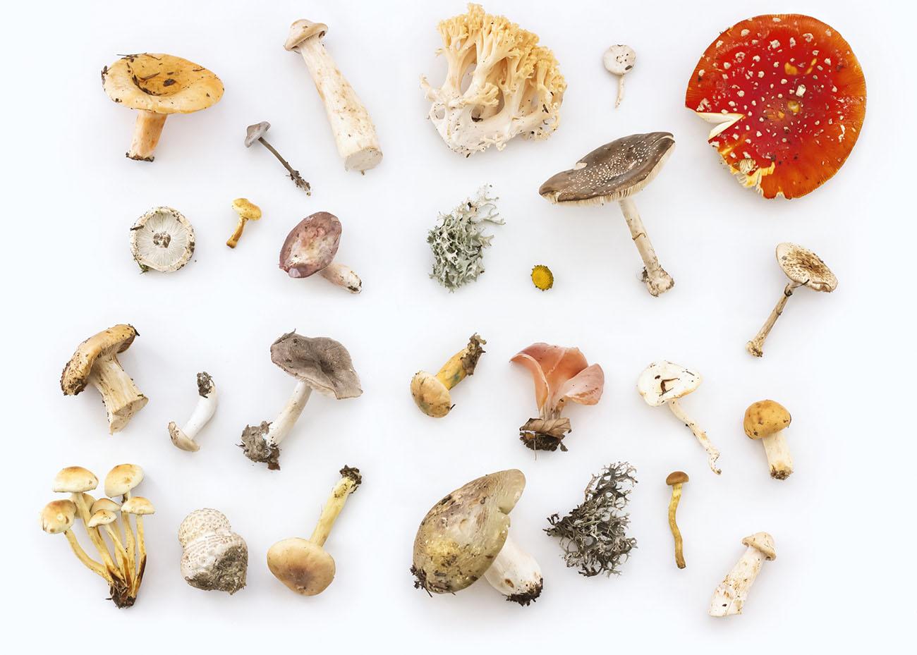 Champignons - Les astuces d'un chef pour reconnaître les comestibles